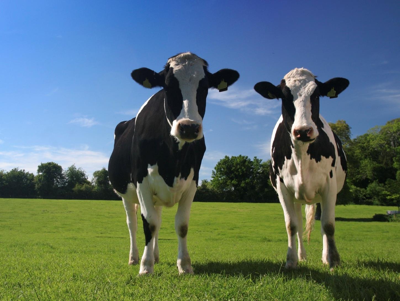 Behavioral Economics of Eating Animals
